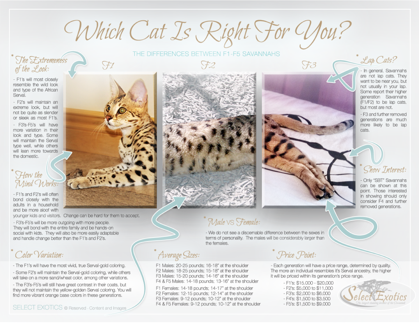 savannah cats - which one is right for you?