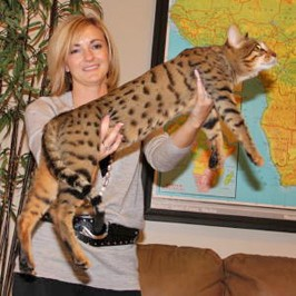 exotic cats for sale at select exotics
