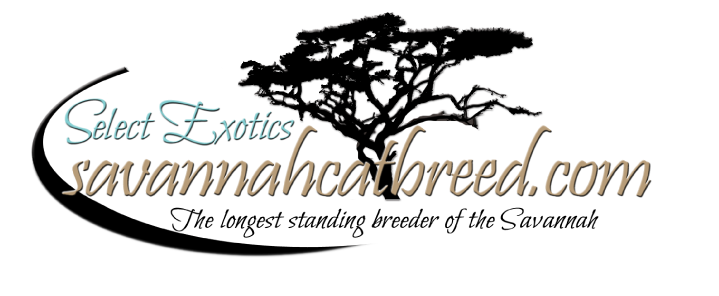 Savannah Cats - Breeder | Select Exotics