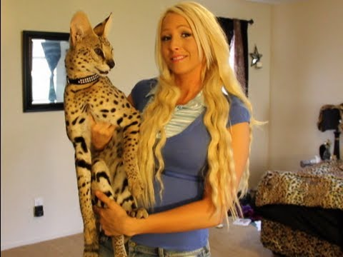 zeus the serval vs savannah