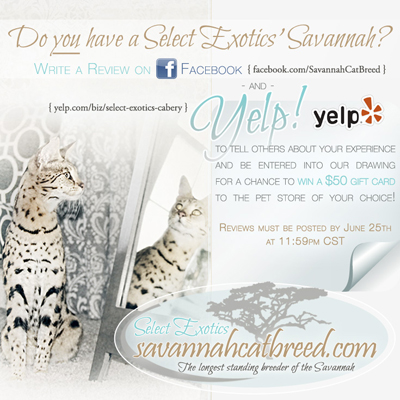 Select Exotics Savannah Cats Breeder