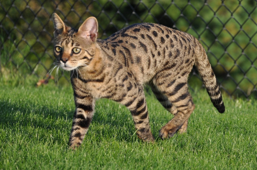 subcutaneous fluids for cats cost