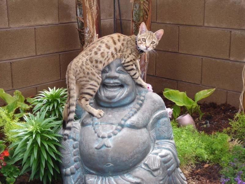 Hunter Buddha