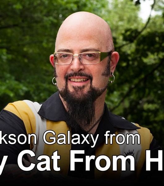 "Savannahs on Jackson Galaxy's ""My Cat From Hell"""