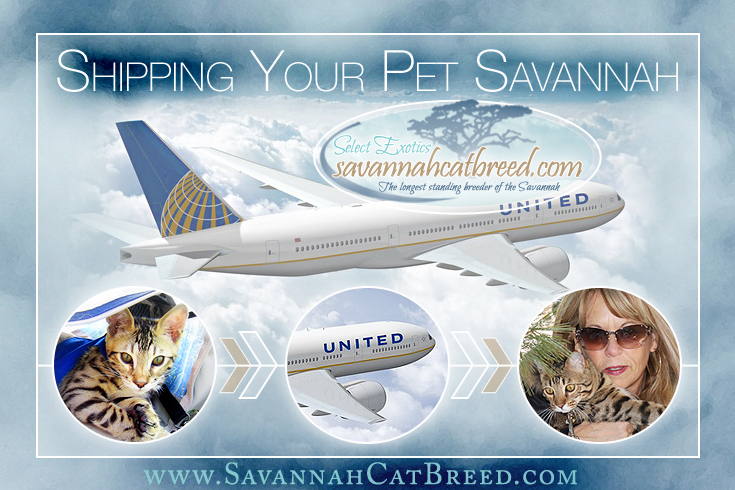 Read about the details of shipping pets