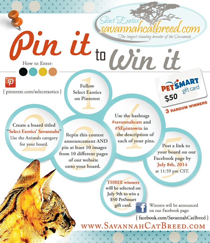 savannah cat contest