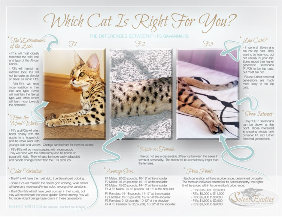 Which cat is right for you?